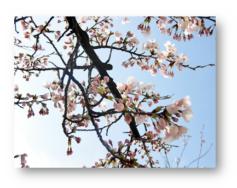 Hello,Spring|長岡三古老人福祉会