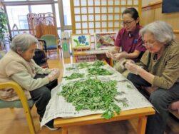 よもぎの葉|長岡三古老人福祉会
