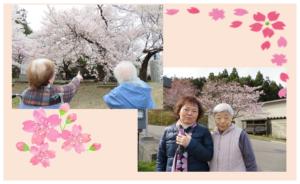 お花見外出レク|長岡三古老人福祉会