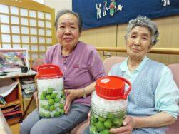 梅シロップ作り|長岡三古老人福祉会