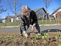 川ながれ菜の苗植え|長岡三古老人福祉会