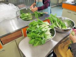 タイ菜漬け作り|長岡三古老人福祉会