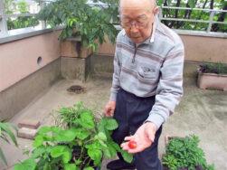 ベランダでいちご摘み|長岡三古老人福祉会