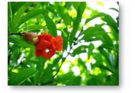 苑庭へ|長岡三古老人福祉会