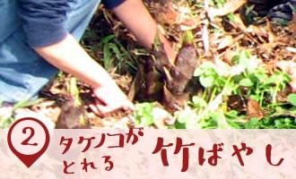 タケノコがとれる竹ばやし|こどもけやき苑