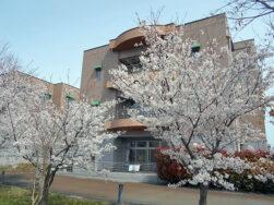 4月14日(日) 桜|長岡三古老人福祉会