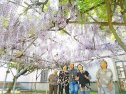 今年も見事に藤の花が咲きました!!|長岡三古老人福祉会