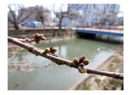 2年目の春|長岡三古老人福祉会