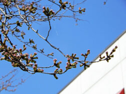 春の訪れを待っています。|長岡三古老人福祉会