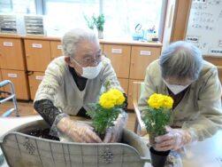 春の苗植え|長岡三古老人福祉会