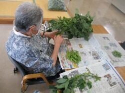 庭で育てた枝豆です|長岡三古老人福祉会