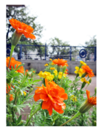 オレンジ色の9月|長岡三古老人福祉会
