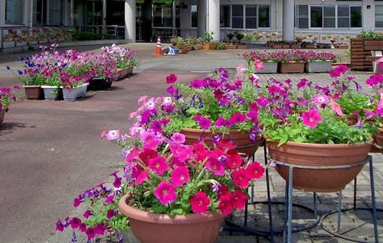 事業・特色「花いっぱい活動へ参加」|長岡三古老人福祉会